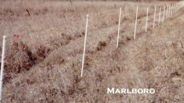 Marlboro Farm Fence